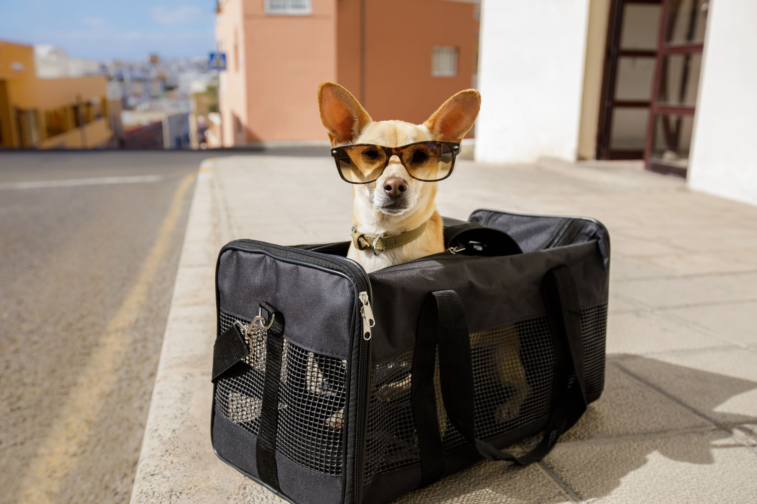 Park with onestopparking.com and fly with your dog